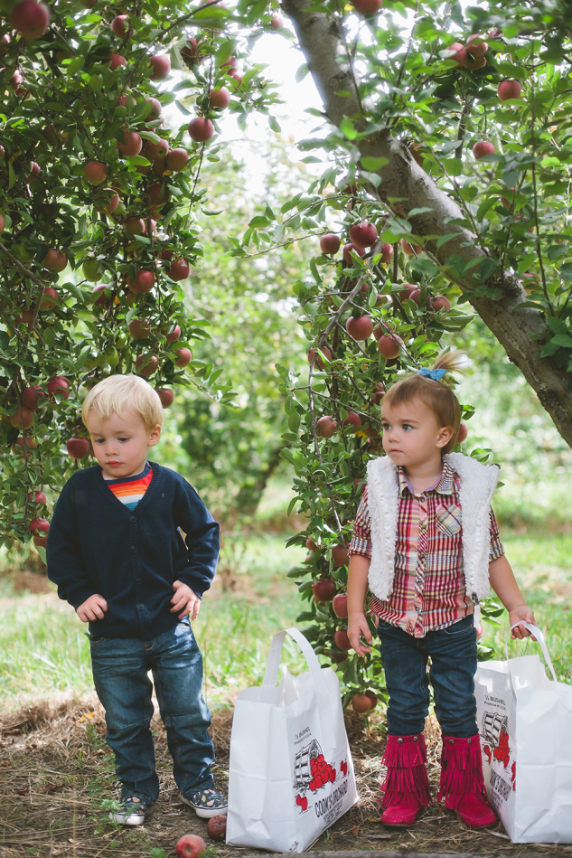 AppleOrchard2013-14