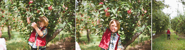 AppleOrchard2013-17