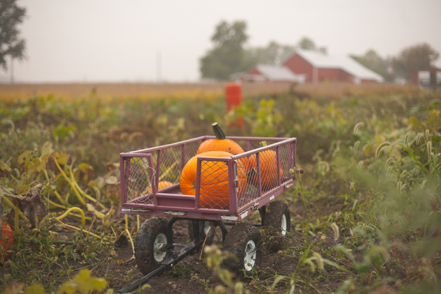 PumpkinPatch2013-44