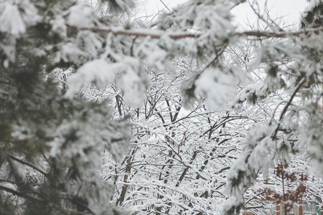 JanuarySnowstorm2014-12