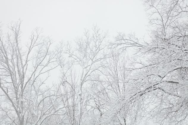 JanuarySnowstorm2014-19
